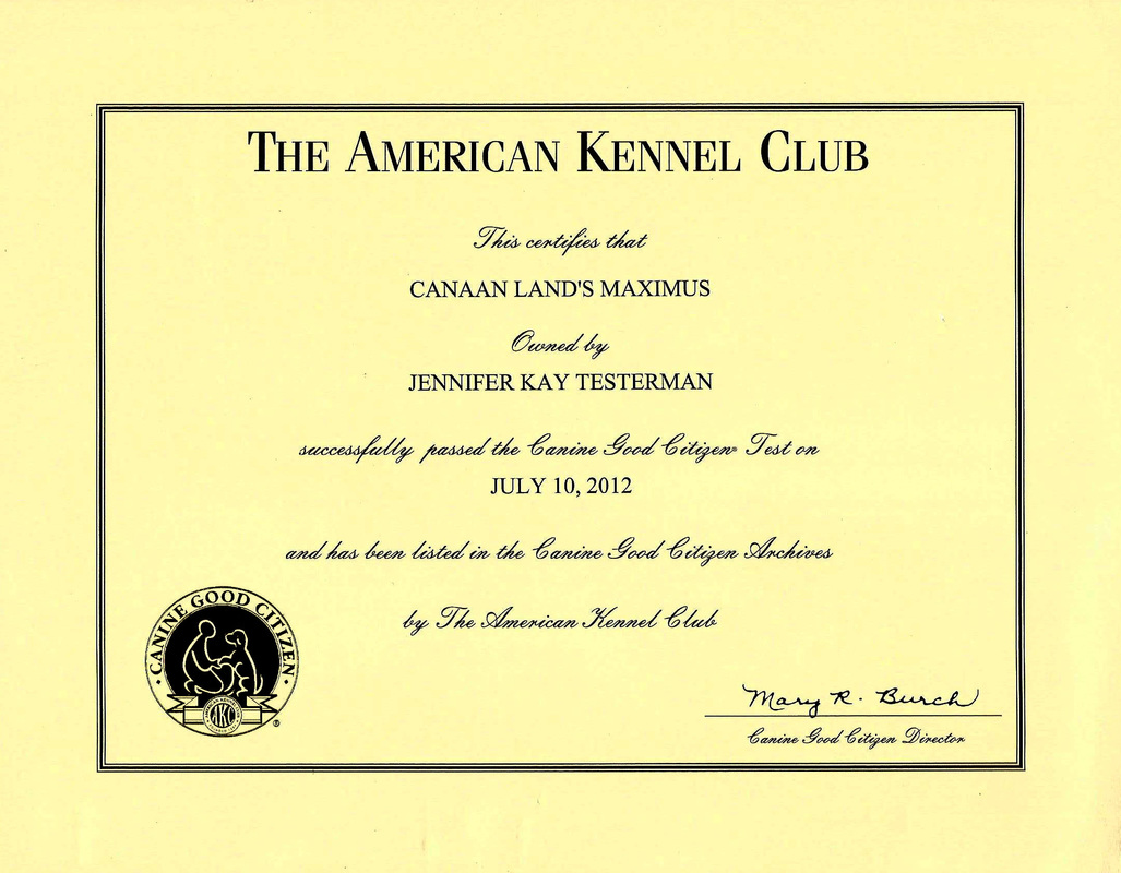 Max Akc Canine Good Citizen Certificate Canaan Land Border Collies