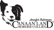 CANAAN LAND BORDER COLLIES
